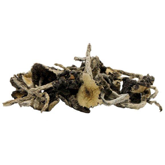 Amazonian Cubensis Psilocybin Mushrooms