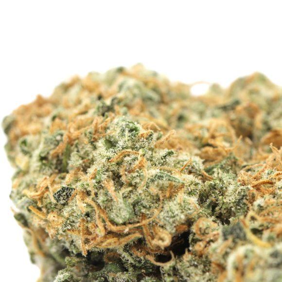 Orange-Crush-macro-1