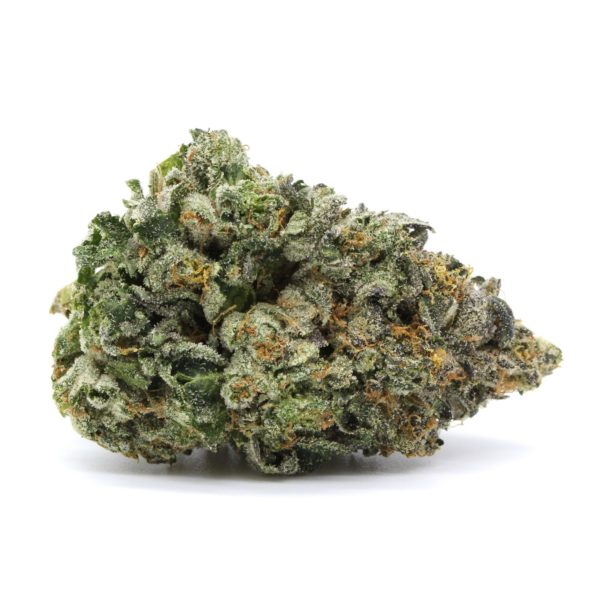 Mike Tyson Indica 1