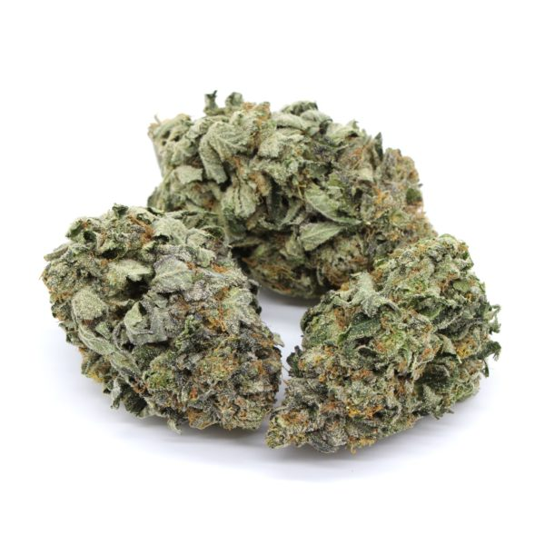 Mike Tyson Indica 2