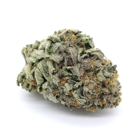 Mike Tyson Indica 3