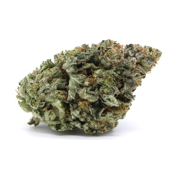 Mike Tyson Indica 4