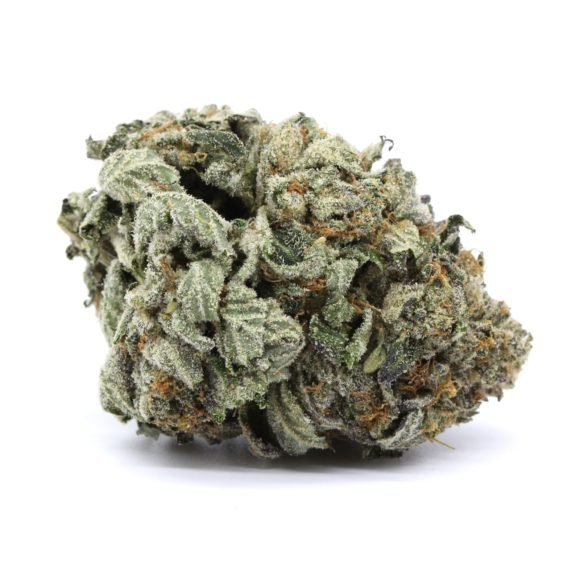 Mike Tyson Indica 5