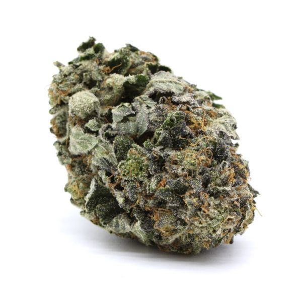 Mike Tyson Indica 6
