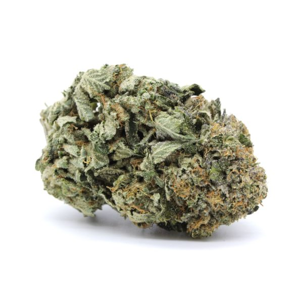 Mike Tyson Indica 7