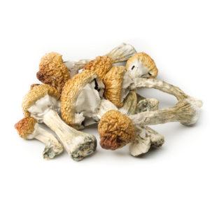 Arenal-Volcano-Magic-Mushrooms-Pile