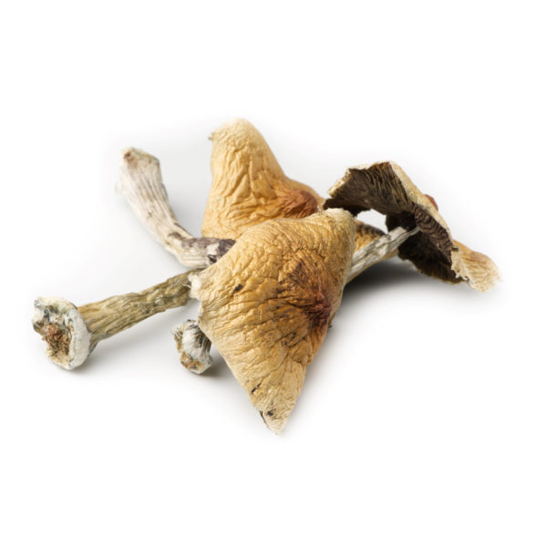 Blue-Meanies-3-Mushrooms