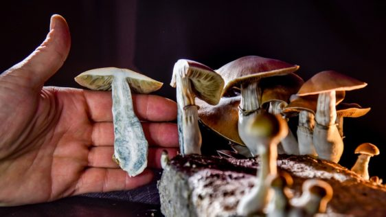 Read more about the article The Micro Guide to Microdosing Mushrooms